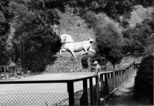 Andersons 1937 Golden Gate Park horse sculpture, photographed in 1959