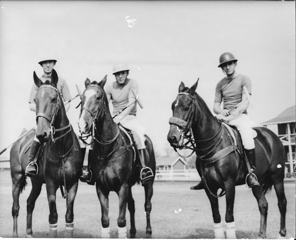 polo-ponies1